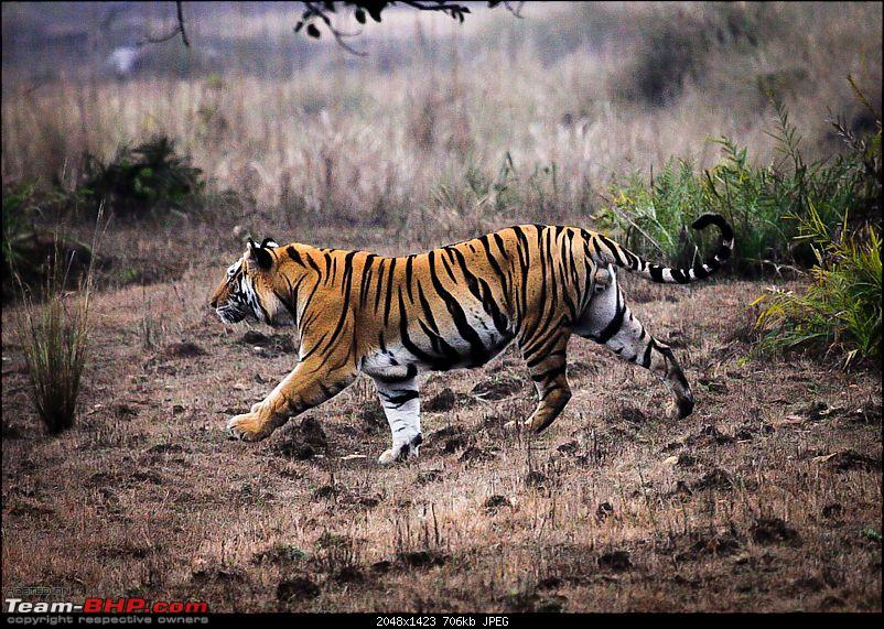 """Reflections on Wildlife Addictions """"Pench and Kanha National Park""""-33.jpg"""