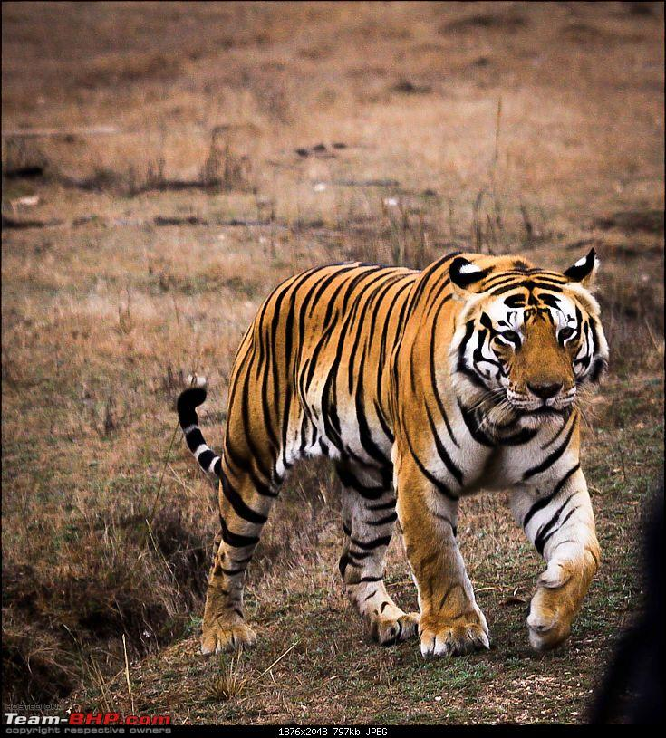 """Reflections on Wildlife Addictions """"Pench and Kanha National Park""""-35.jpg"""