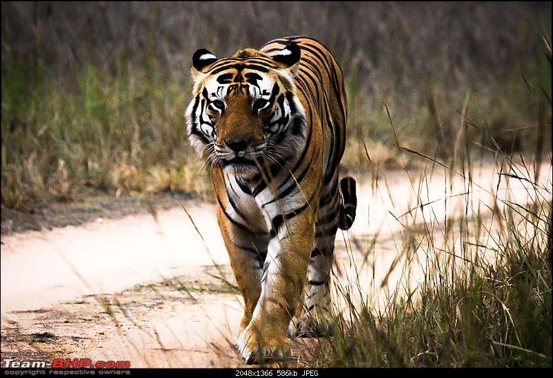 """Reflections on Wildlife Addictions """"Pench and Kanha National Park""""-36.jpg"""
