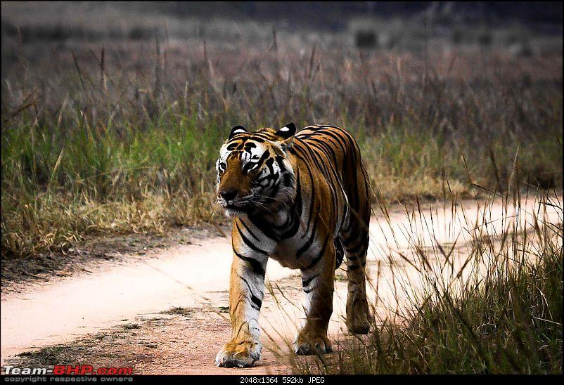 """Reflections on Wildlife Addictions """"Pench and Kanha National Park""""-37.jpg"""