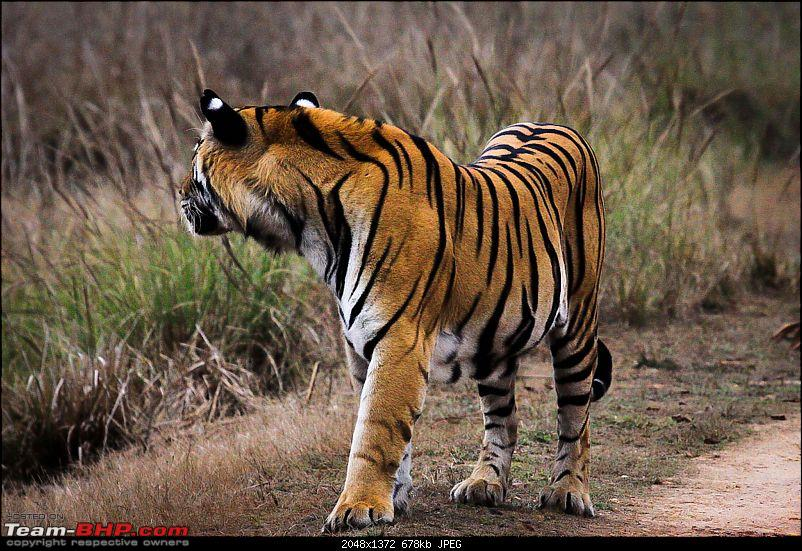 """Reflections on Wildlife Addictions """"Pench and Kanha National Park""""-39-2.jpg"""