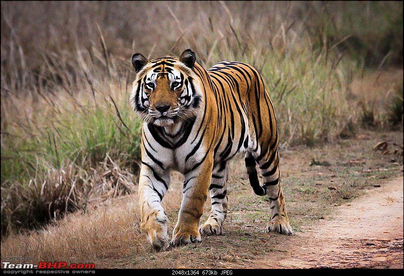 """Reflections on Wildlife Addictions """"Pench and Kanha National Park""""-41.jpg"""
