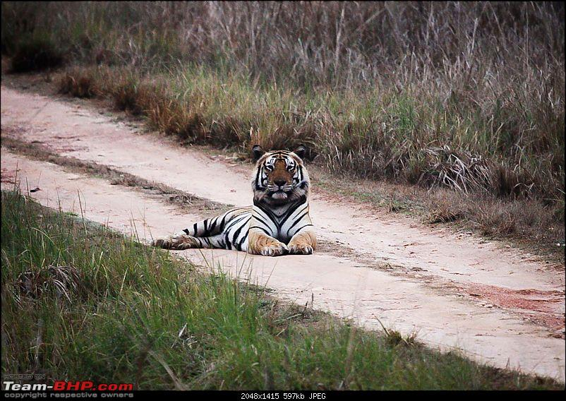 """Reflections on Wildlife Addictions """"Pench and Kanha National Park""""-45.jpg"""