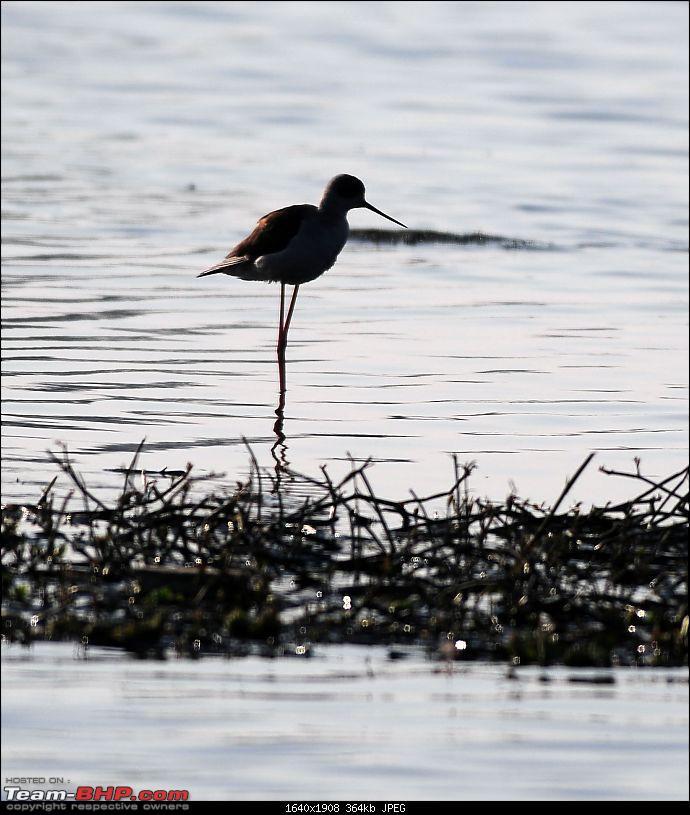 Visit to Okhla Bird Sanctuary, New Delhi-5853.jpg <br /> <a href=