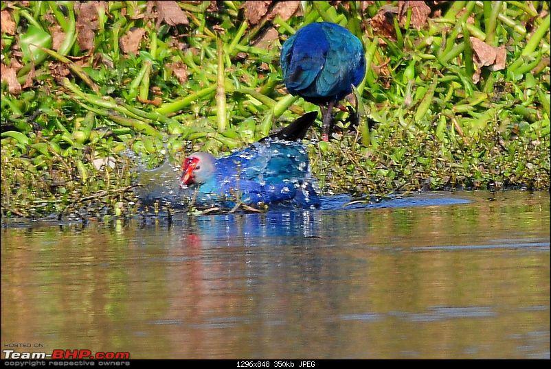 Visit to Okhla Bird Sanctuary, New Delhi-5888.jpg <br /> <a href=