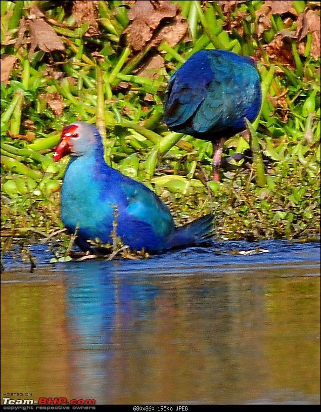 Visit to Okhla Bird Sanctuary, New Delhi-5893.jpg <br /> <a href=