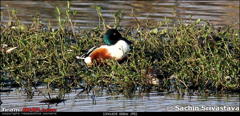 Trip to Okhla Bird Sanctuary-img_7470.jpg