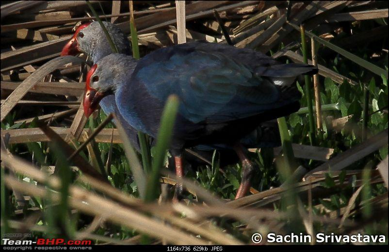 Trip to Okhla Bird Sanctuary-img_7499.jpg