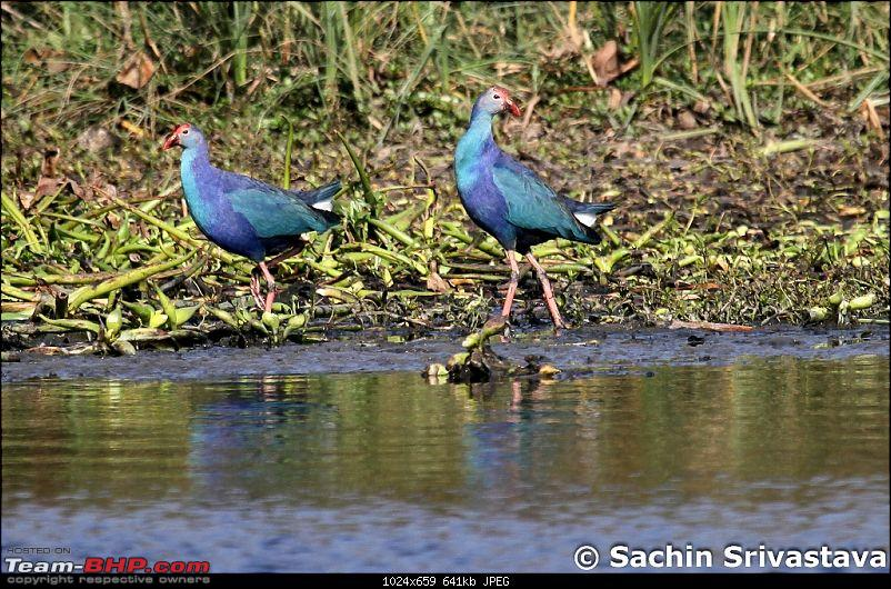 Trip to Okhla Bird Sanctuary-img_7573.jpg