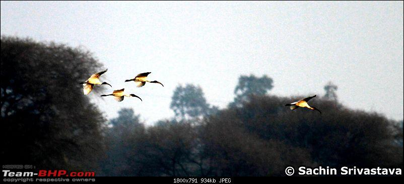 Birds in Sultanpur bird sanctuary-img_6361_1.jpg
