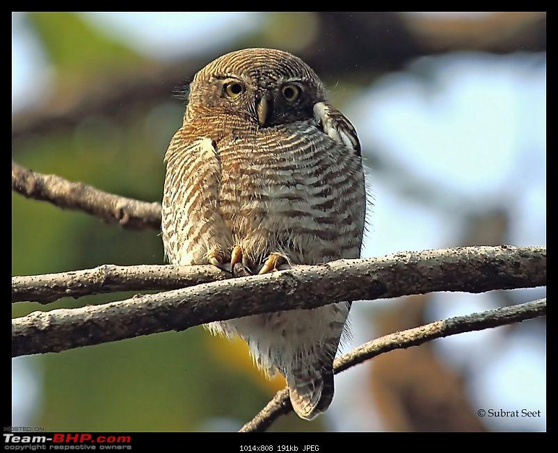 Bandhavgarh - A Different Perspective-sharpen-owl68_filtered-copy-2.jpg