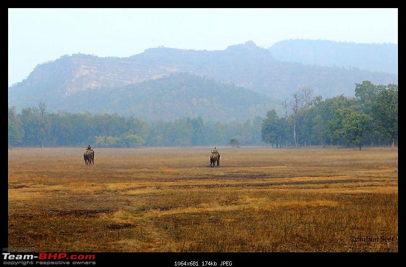 Bandhavgarh - A Different Perspective-rajbehra8-copy.jpg