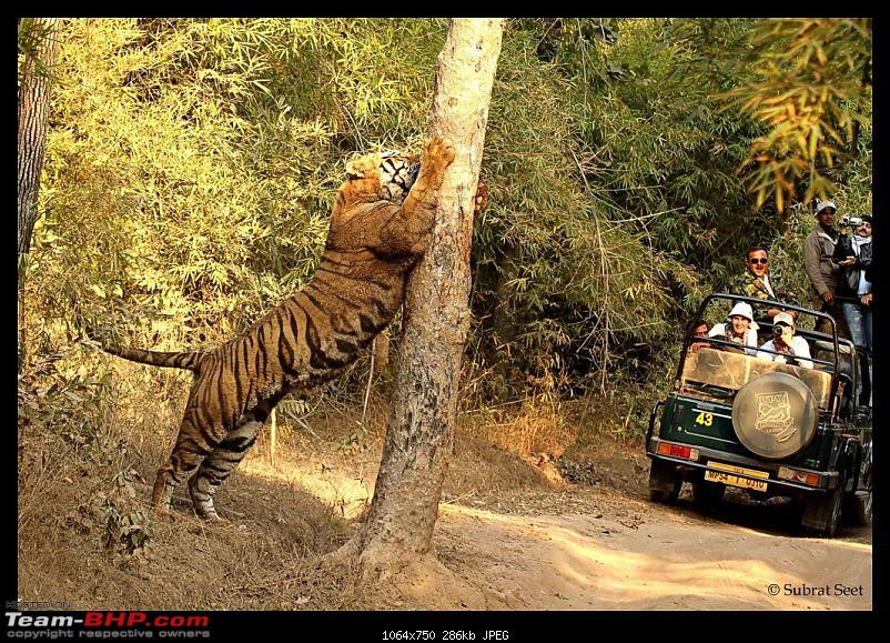 Bandhavgarh - A Different Perspective-4757061134f34a8d1670c9.jpg