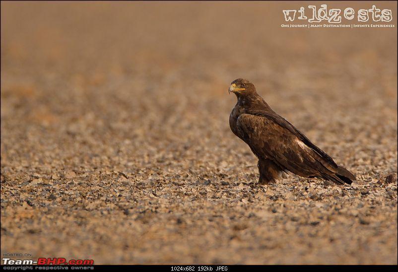 Khushboo Gujarat Ki - A road trip to the birding paradise-lrk-01.jpg