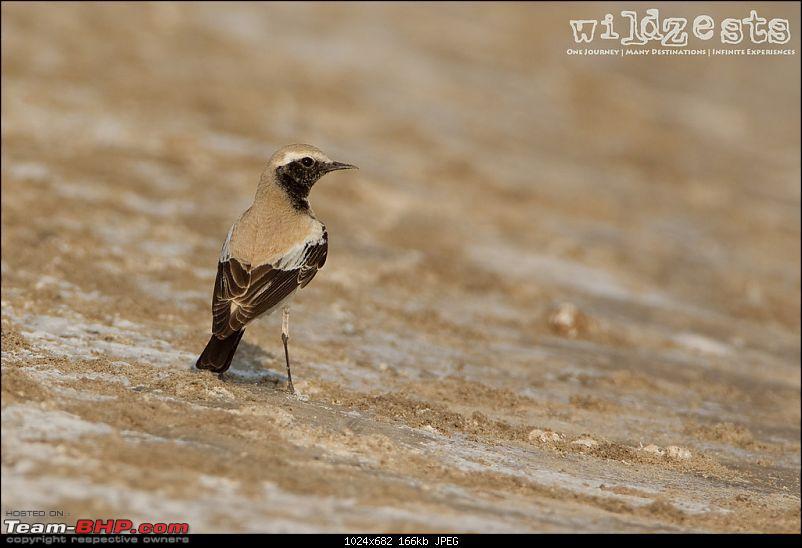 Khushboo Gujarat Ki - A road trip to the birding paradise-lrk-20.jpg