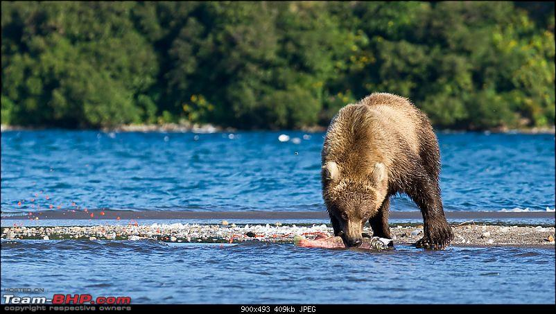 Bears, Volcanoes & what not, Far East Russia: Photologue-_a0r7457rs.jpg