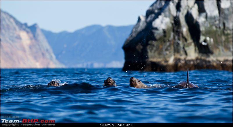 Bears, Volcanoes & what not, Far East Russia: Photologue-_a0r8063.jpg