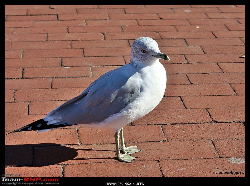 New York/Boston trip-seegull.jpg