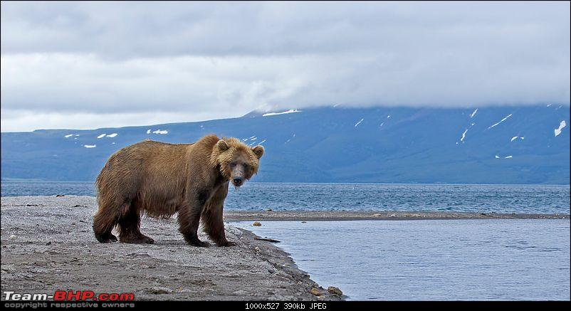Bears, Volcanoes & what not, Far East Russia: Photologue-_a0r7118.jpg
