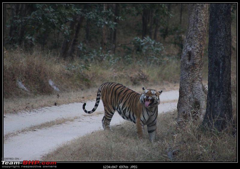 Season 2011-2012 : Independent Tiger monitoring at Pench & Tadoba Tiger reserves-img_0171.jpg
