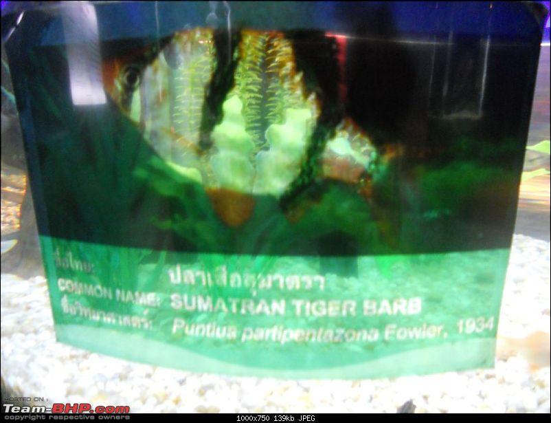 Amazing Thailand-dscn0136.jpg