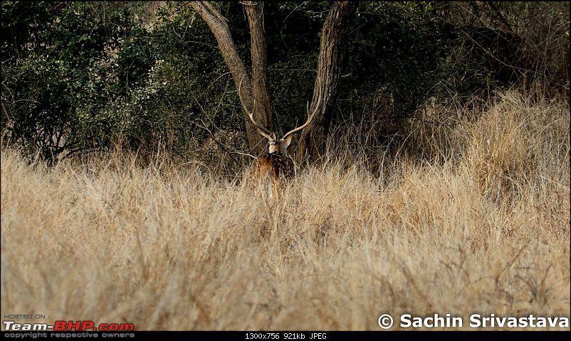 Sariska Tiger Reserve - Land of Tigers? Quick getaway from Gurgaon-img_6634.jpg