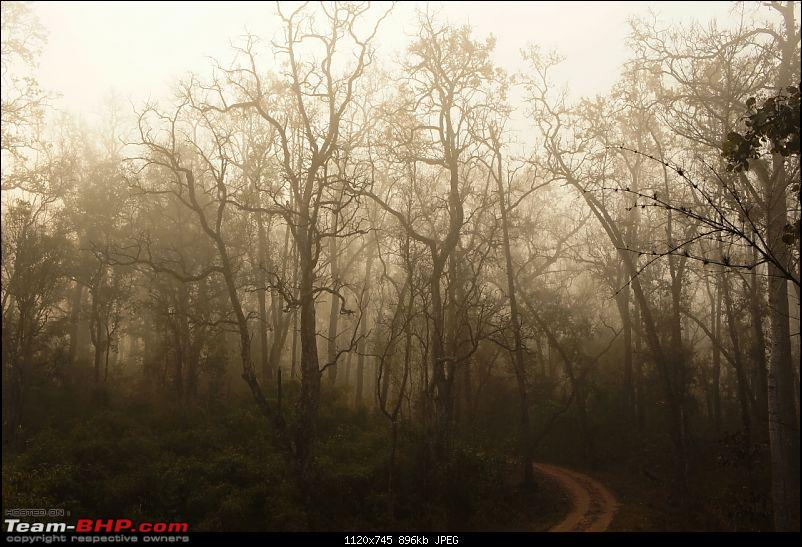"Reflections on Wildlife Addictions ""Pench and Kanha National Park""-86.jpg"