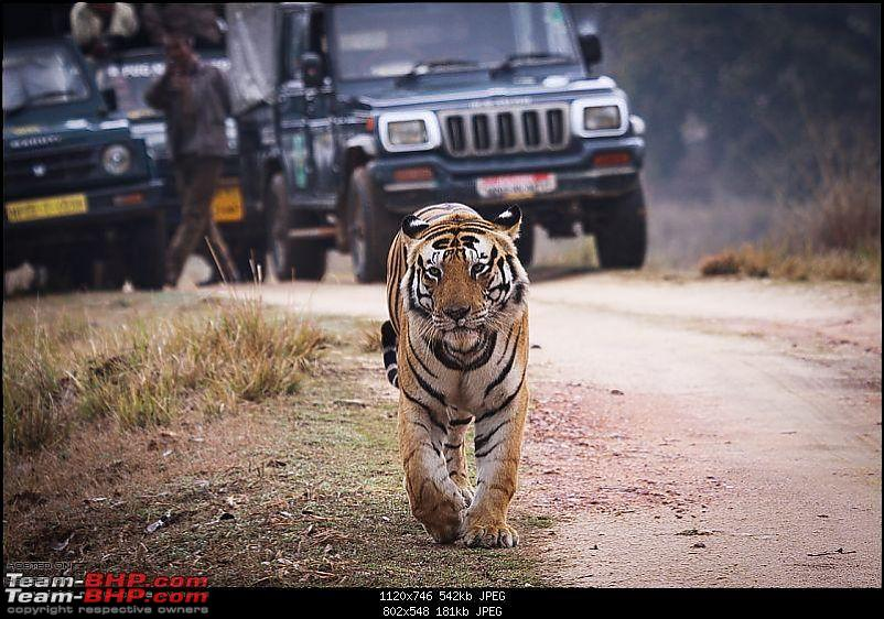 "Reflections on Wildlife Addictions ""Pench and Kanha National Park""-51.jpg"