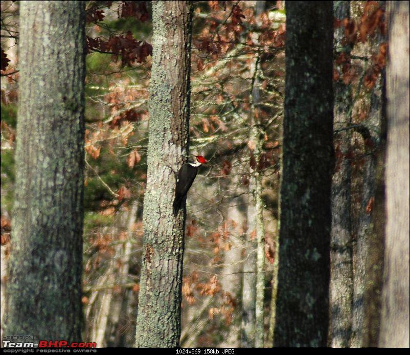 Fall Creek State Park - Tennessee - Photoblog-dsc_0311-large.jpg