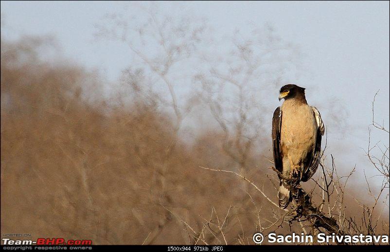 Sariska Tiger Reserve - Land of Tigers? Quick getaway from Gurgaon-img_8318_1.jpg