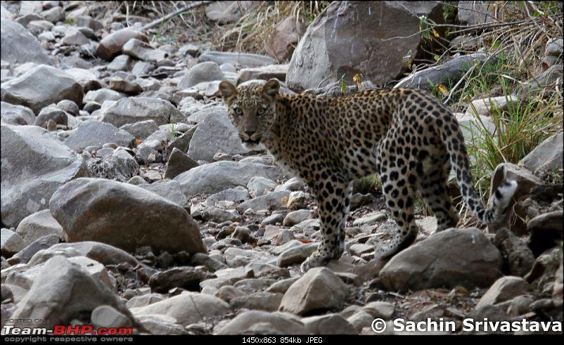 Sariska Tiger Reserve - Land of Tigers? Quick getaway from Gurgaon-img_8605.jpg