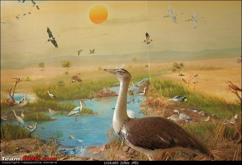 The Great Indian Bustard and the grass lands of Rollapadu.-museum_2.jpg