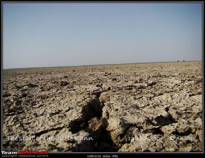 The Bird and The Rann-12mar-picture-478.jpg