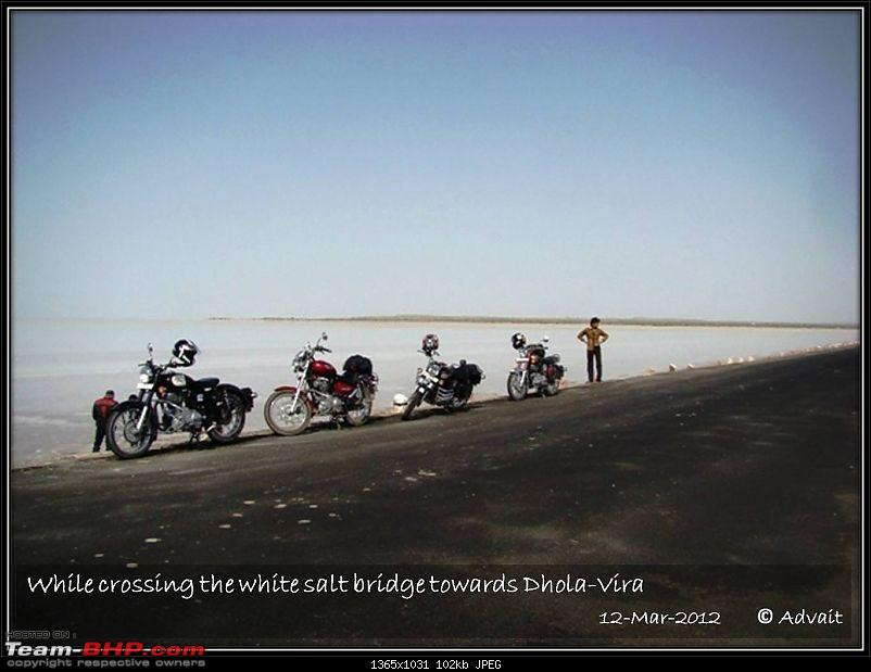 The Bird and The Rann-12mar-picture-606.jpg
