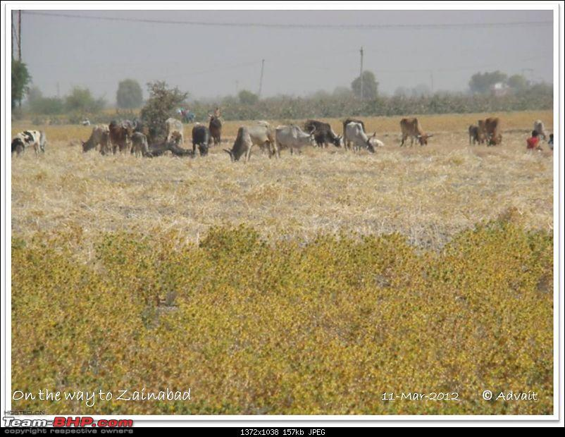 The Bird and The Rann-11march-picture-297.jpg