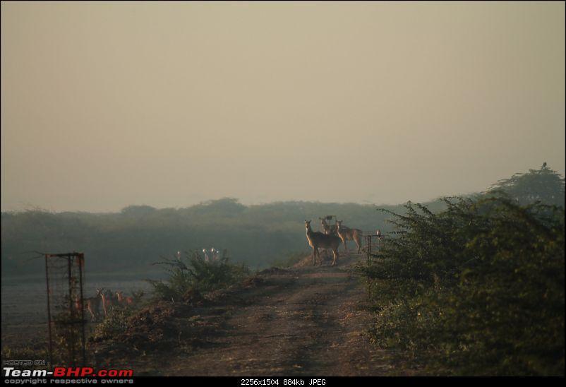 Khijadia Bird Sanctuary - Jamnagar, Gujarat-img_4907.jpg