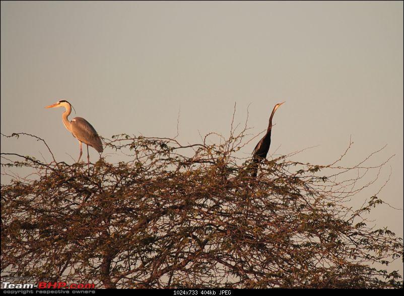 Khijadia Bird Sanctuary - Jamnagar, Gujarat-img_4916.jpg