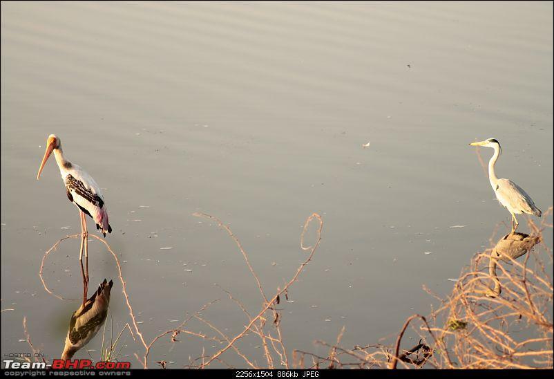Khijadia Bird Sanctuary - Jamnagar, Gujarat-img_4961.jpg