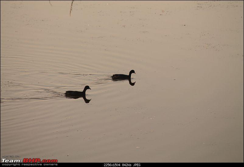 Khijadia Bird Sanctuary - Jamnagar, Gujarat-img_4981.jpg