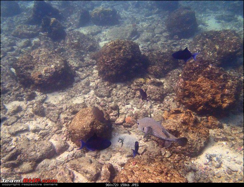 Swimming with the fishes - Scuba Diving-399027_332562560133569_193703570686136_901185_344954262_n.jpg