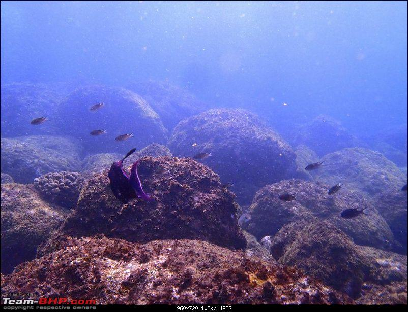 Swimming with the fishes - Scuba Diving-480185_332558133467345_193703570686136_901142_2054607021_n.jpg