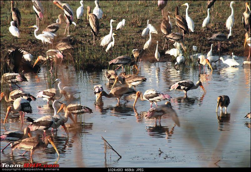 Khijadia Bird Sanctuary - Jamnagar, Gujarat-img_5049.jpg