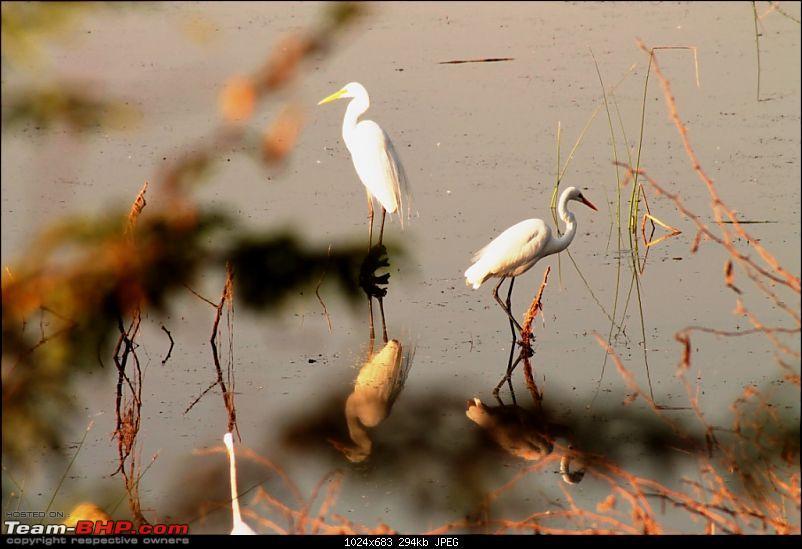 Khijadia Bird Sanctuary - Jamnagar, Gujarat-img_5088.jpg