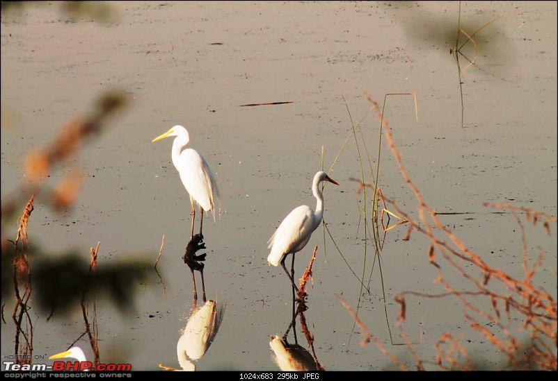 Khijadia Bird Sanctuary - Jamnagar, Gujarat-img_5092.jpg