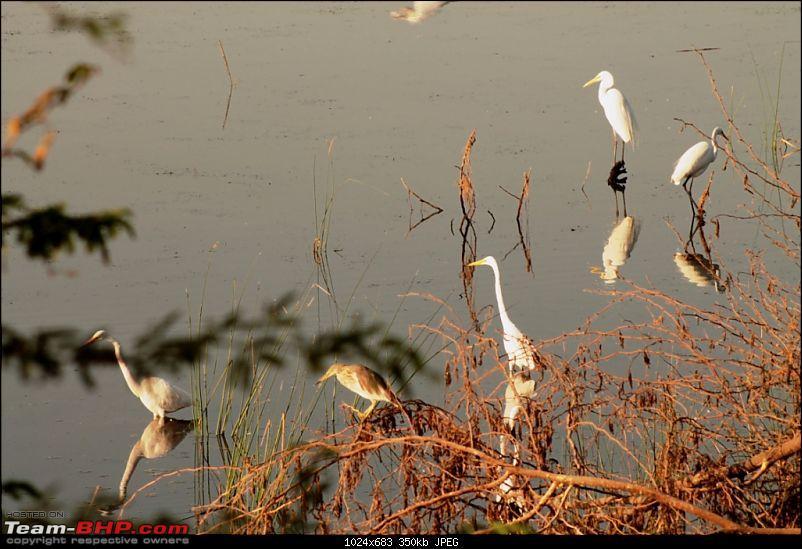 Khijadia Bird Sanctuary - Jamnagar, Gujarat-img_5093.jpg