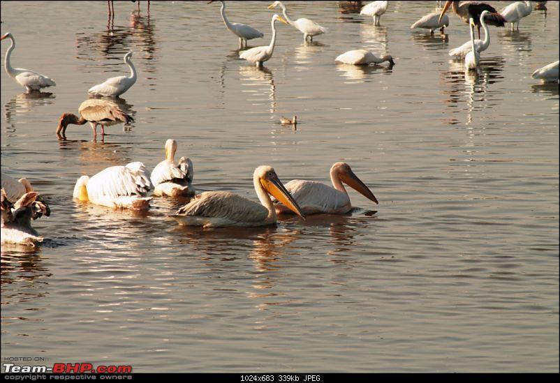 Khijadia Bird Sanctuary - Jamnagar, Gujarat-img_5270.jpg