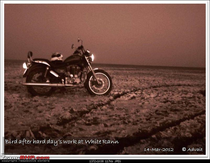 The Bird and The Rann-14mar-picture-1029.jpg