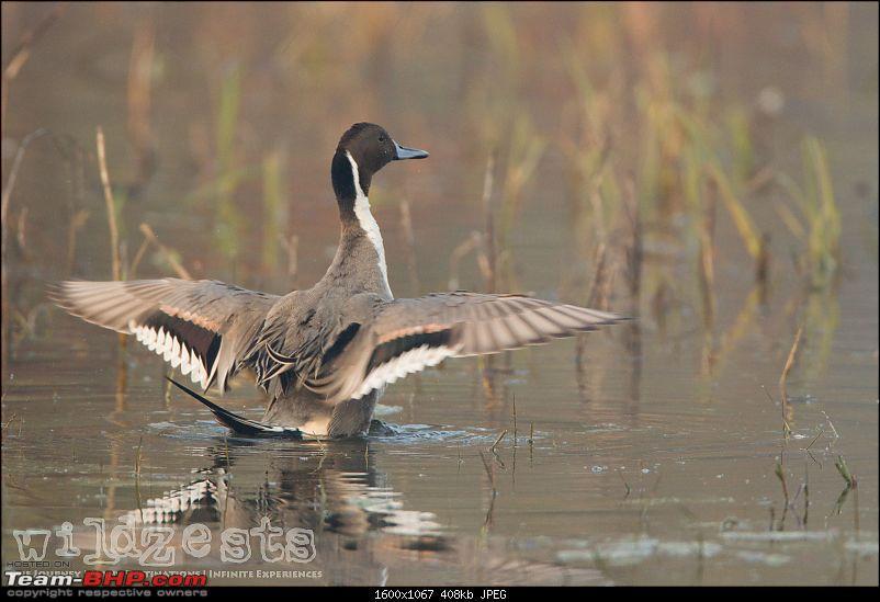 Bengalooru to Bharatpur - A solo birding trip!-bharatpur-021.jpg