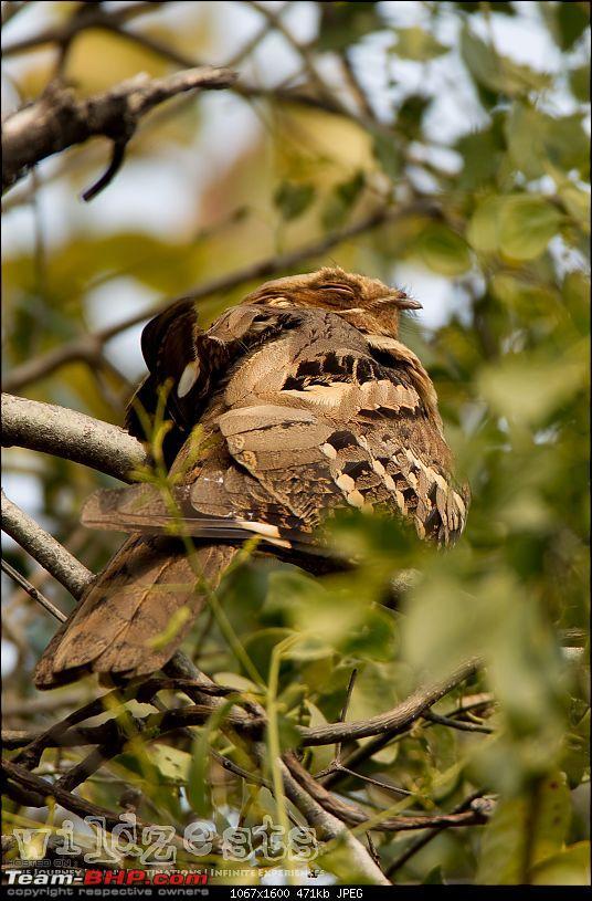 Bengalooru to Bharatpur - A solo birding trip!-bharatpur-116.jpg