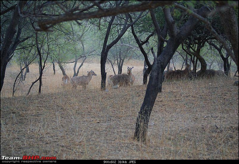 One Lucky Sunday At Ranthambhore- 24/03/12 Trip Report!!-dsc08310.jpg